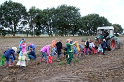 Kinder bei der Kartoffelernte
