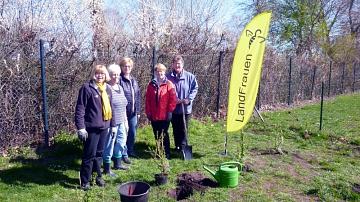 Landfrauen Team beim Pflanzen