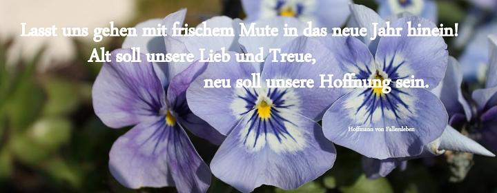 Hornveilchen mit Spruch zum Jahreswechsel©LFV Wietzen,EM