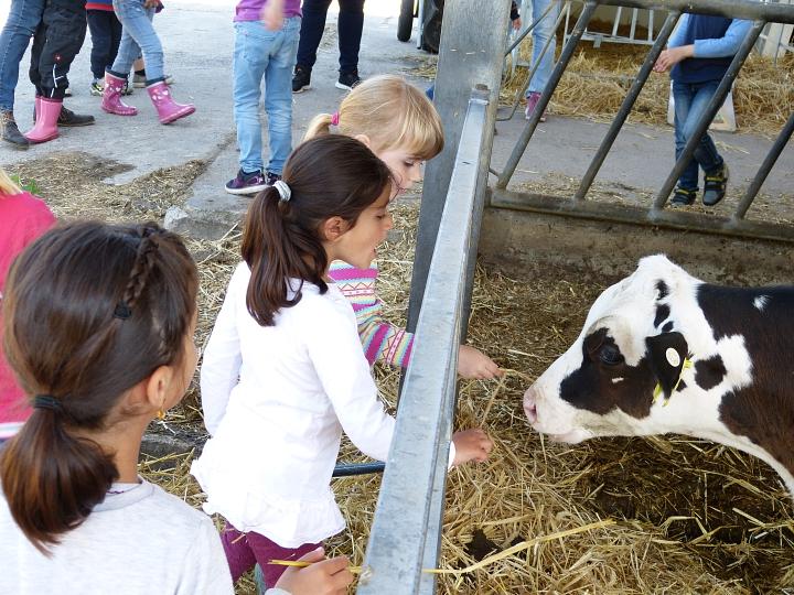 Landwirtschaft für kleine Hände - Bild 2