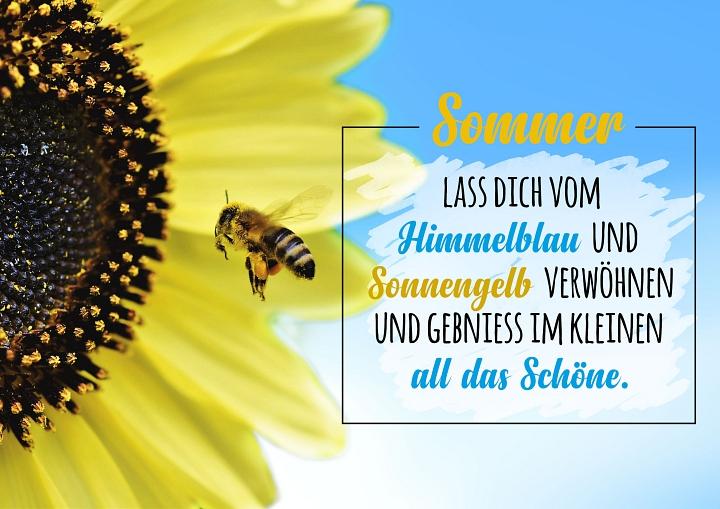 Startseite Sommer©LFV Borstel