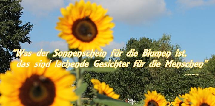 Sonnenblume mit Spruch©LFV Wietzen, EM