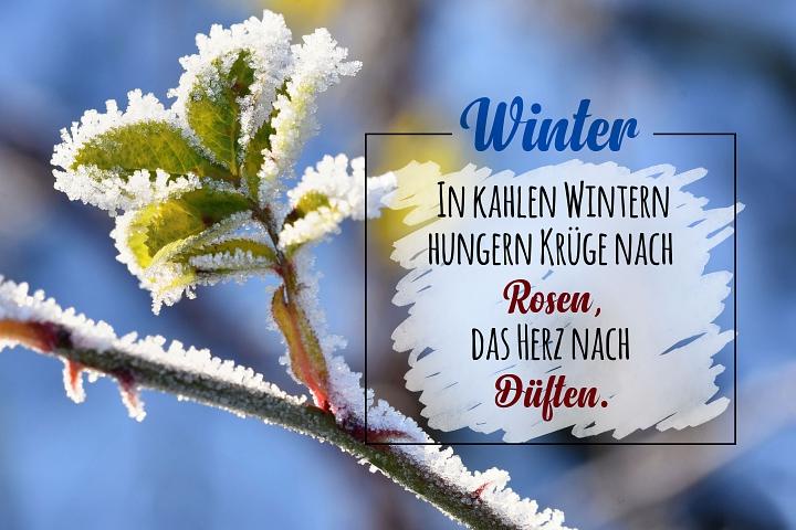 Winter Zitat 2020 - Startseite©LFV Borstel